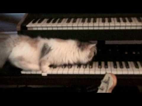 Magenta Skycode - The Simple Pleasures. Joko LOL catsit olivat internetsin kuuminta hottia 2010? Kyllä kai.     Ihania kissoja - katso video! Millä muulla tätä voisi myydä? Jori keinussa - katso hurjat vauhdit! Ei taida toimia.    Hienoa suomalaista musiikkia kuitenkin. Videon anti-machoilu sopii tyyliin.