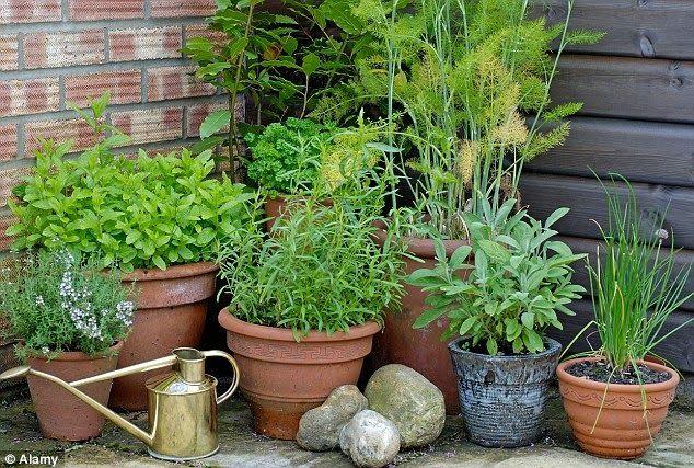 Saakikandev potiaed rõdule või terrassile. - Sweet Home