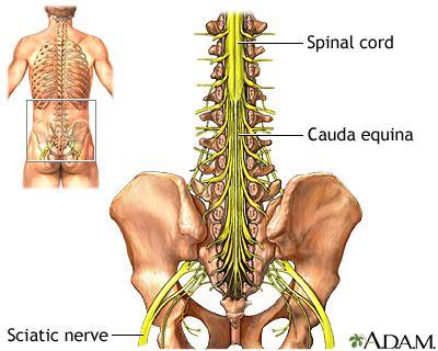dolor de tiroides y pelvis
