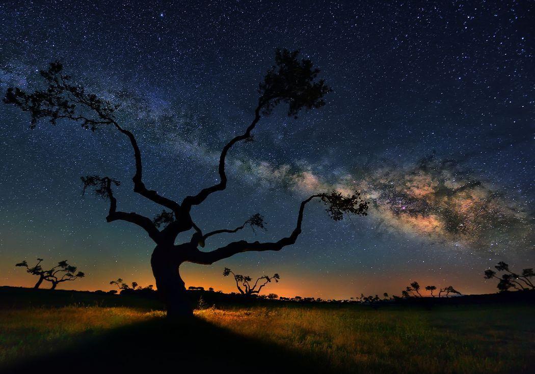 ¿Es verdad que hay más árboles en la Tierra que estrellas en la Vía Láctea?