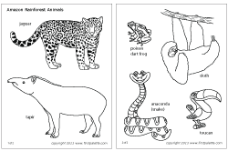 Amazon Rainforest Animals Also In Color Have Asian Rainforest And African Too For D Rainforest Animals Amazon Rainforest Animals Animal Coloring Pages