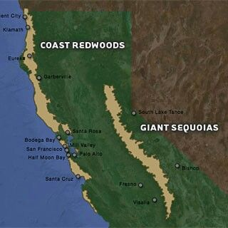 Giant Sequoias and Redwoods | places to see | California map ... on