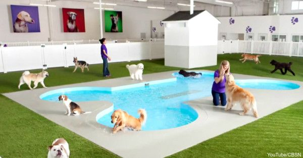 The Most Luxurious Airline Terminal Ever — And It Is For Your Pet