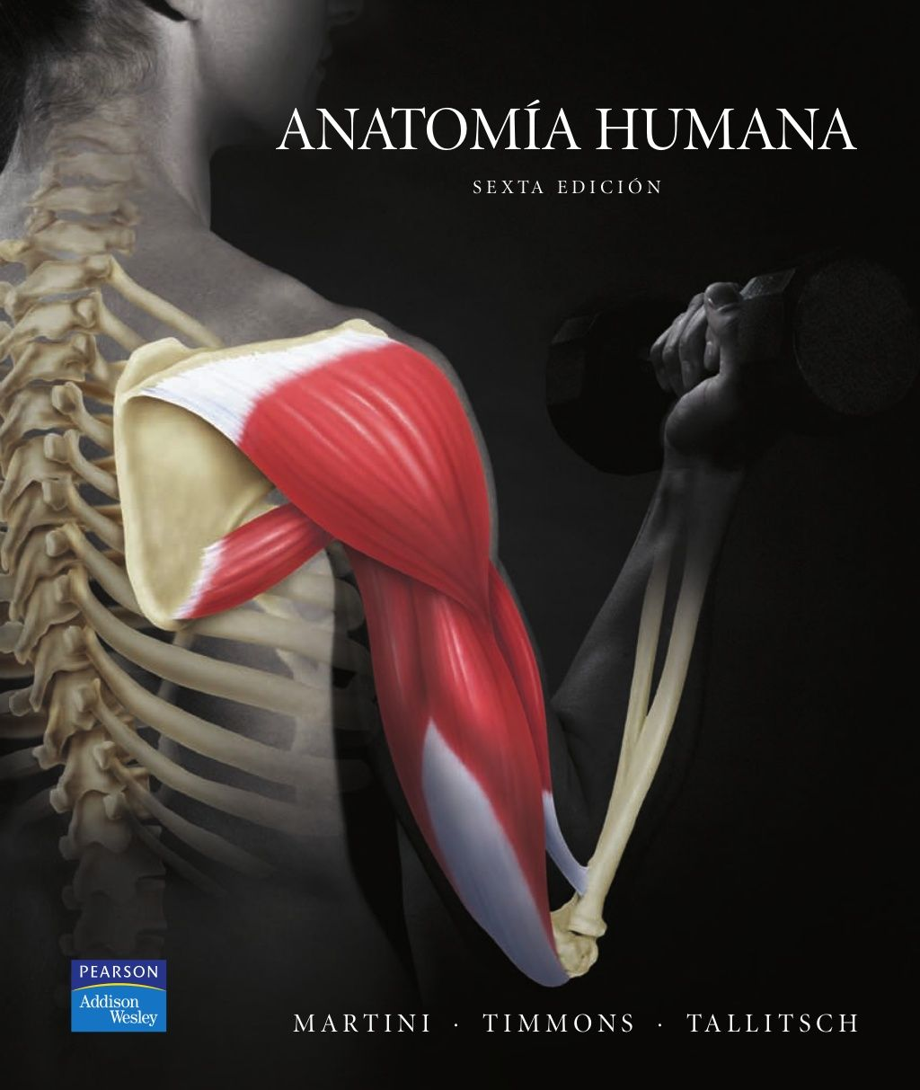 Anatomía humana by Paco R via slideshare   anatomía   Pinterest ...