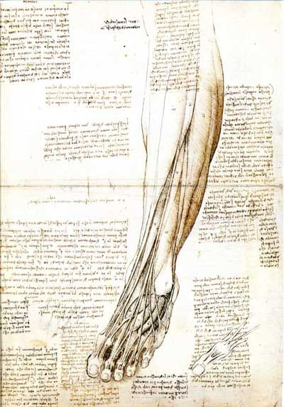 Leonardo Drawings A Study Of Anatomy From The Leonardo In 2018