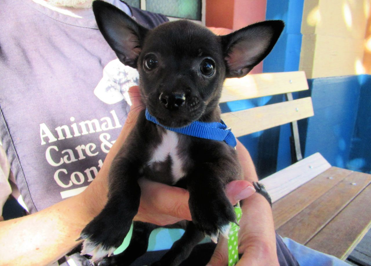 Adoptable Animals Pet Care Animals Dog Adoption
