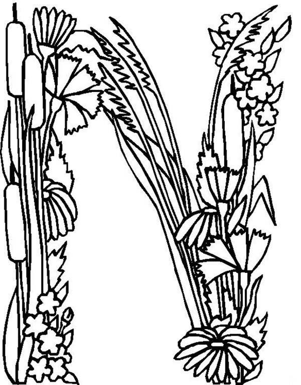 Alphabet Flowers, Alphabet Flowers Letter N Coloring Pages: Alphabet ...