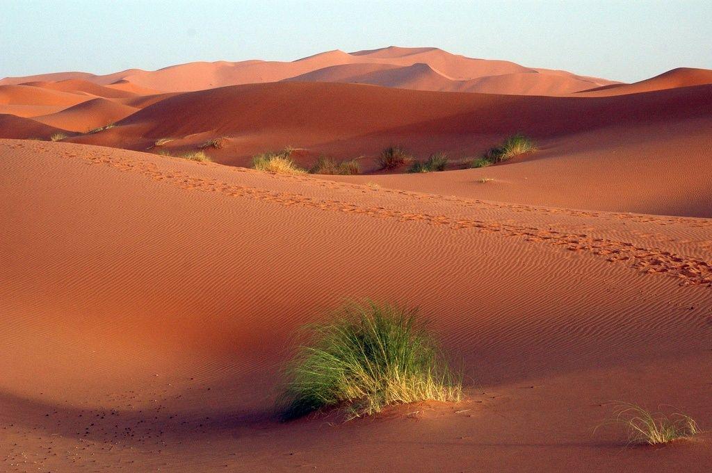 sahara-desert-algeria.jpg (1024×681)