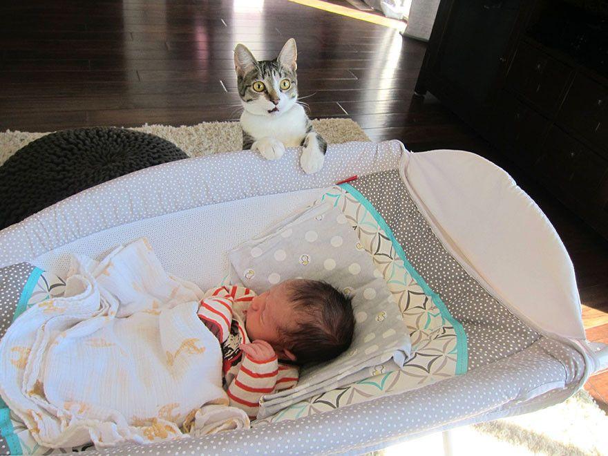 初めて人間の赤ちゃんを見たネコの反応に関連した画像-02