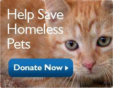 Petsmart Charities Inc 19601 N 27th Ave Phoenix Az 85027 1 800 423 Pets 7387 Pets Homeless Pets Donate