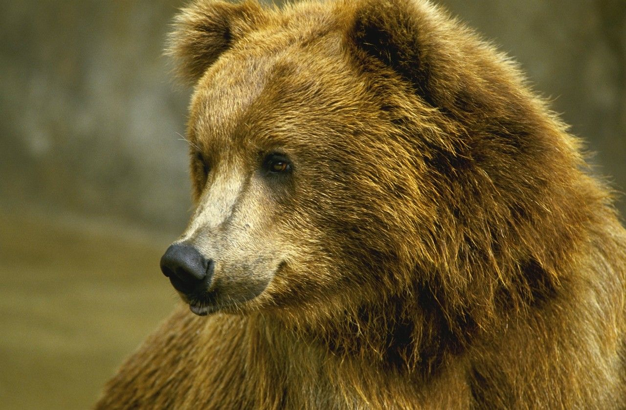 Pin By Angie Brown On Bears