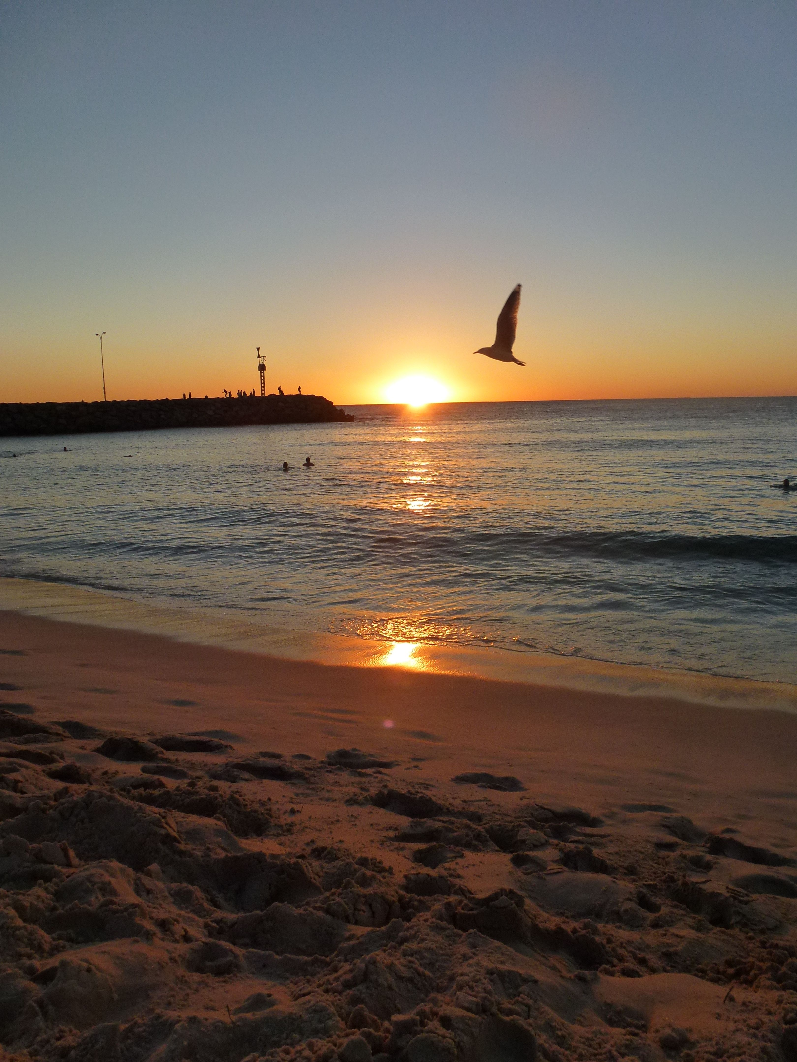 Bird flying across the sunset. | Sunset, Sunrise, Sun