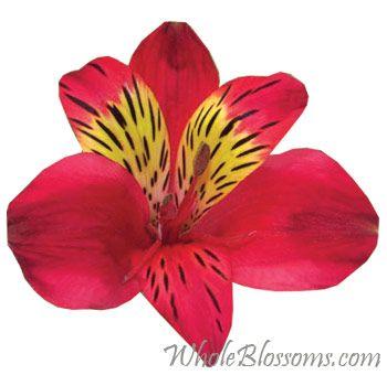 Buy Gorgeous Red Alstroemeria Flowers Online Whole Blossoms Wholesale Flowers Flowers Online Red Wedding Flowers