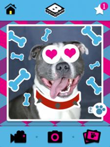 Verander je huisdier in een ster gratis app Boomerang Pet