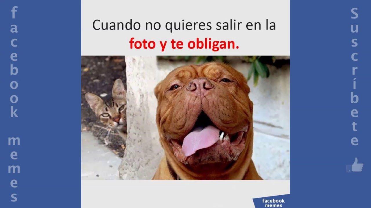 Memes Graciosos 2018 Videos Chistosos Para Whatsapp Cortos Facebook Memes Youtube Animals Dogs