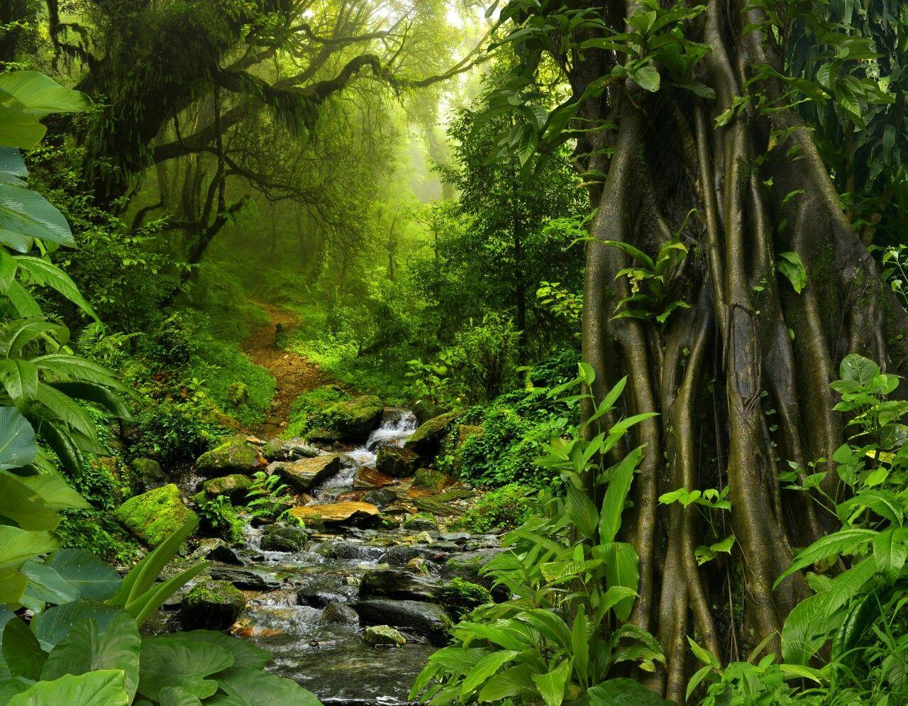 Pin by Vishnukaurora on nature Rainforest, Jungle wall