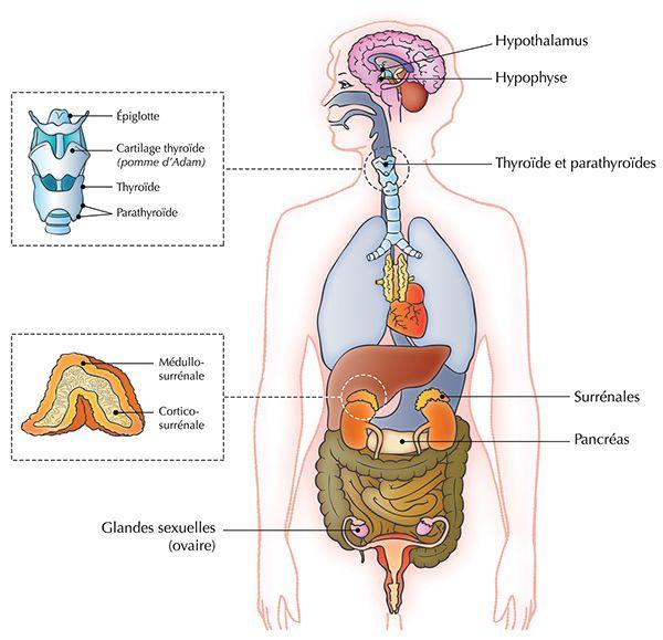 Biology And Anatomy On Behance Med Pinterest Anatomy