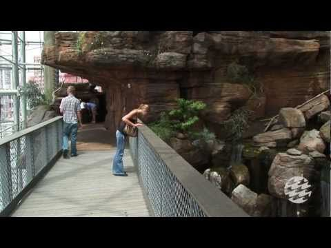 Preview Your Visit to the National Aquarium - YouTube ...