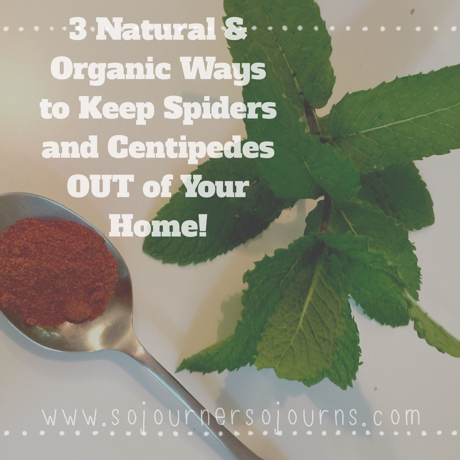 3 Natural and Organic Ways to Keep Spiders and Centipedes