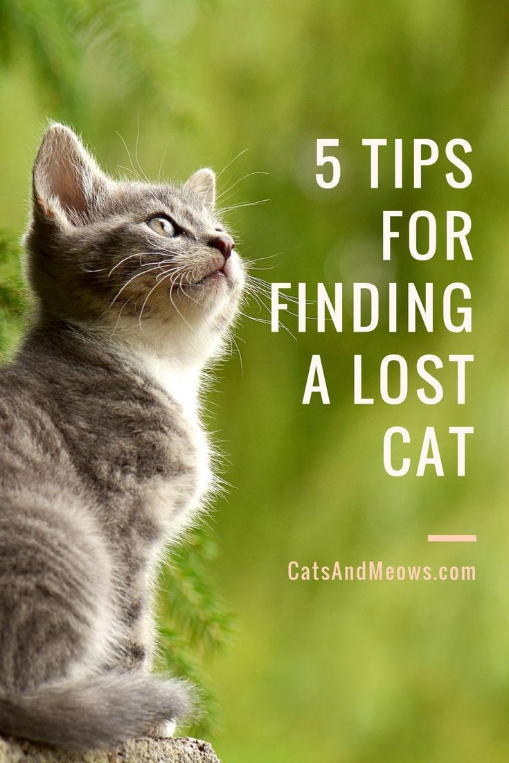 5 Tips For Finding A Lost Cat Cats and Meows Lost cat