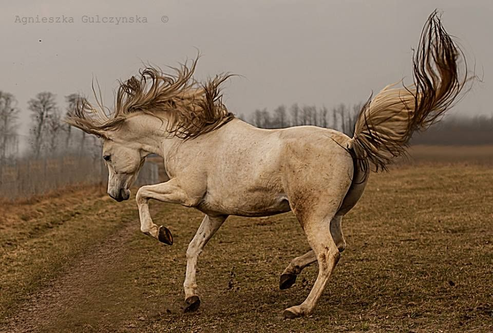 Sassy horse, hest, animal, blowing, beauty, furry, beautiful, gorgeous