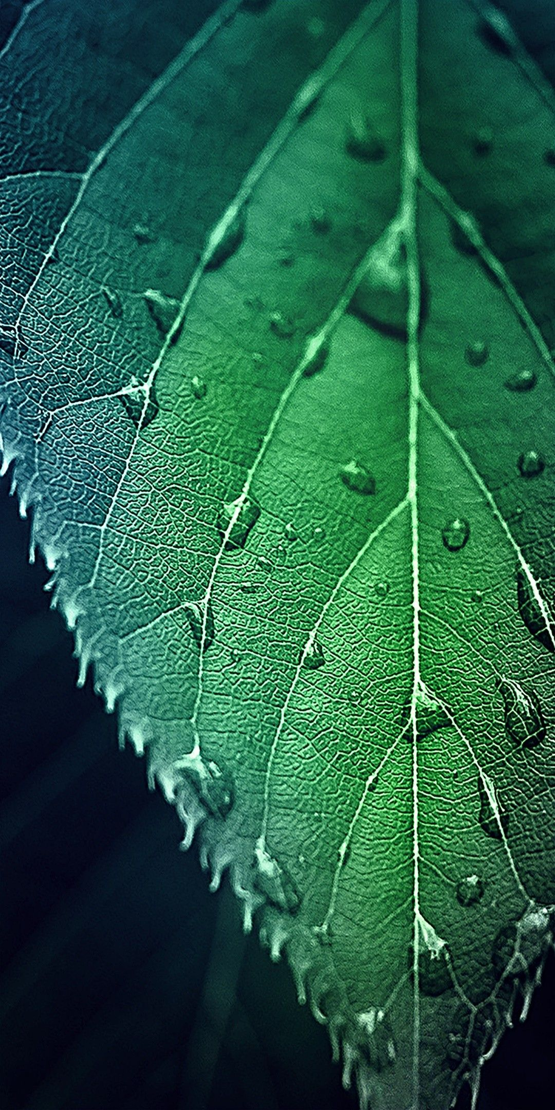 Hd Leaf Phone Wallpaper Rose Gold Wallpaper Iphone Dark Wallpaper