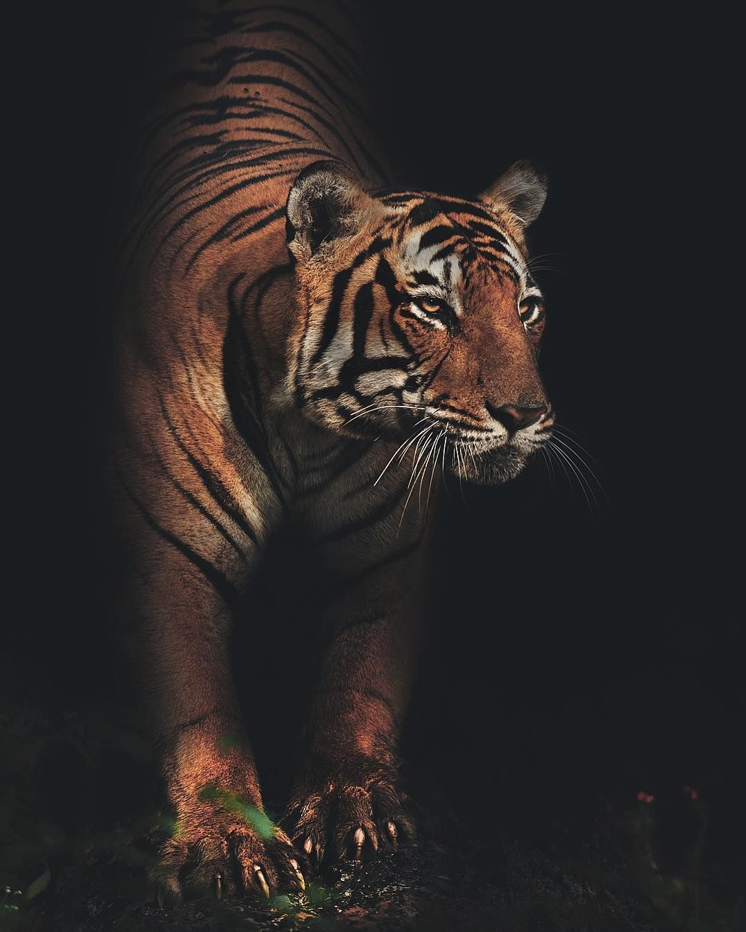 Unforgettable Portraits Of Wild Animals By Shaaz Jung Tiere