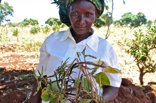 Photos Depicting Climate Smart Farm And Policy Activities In East