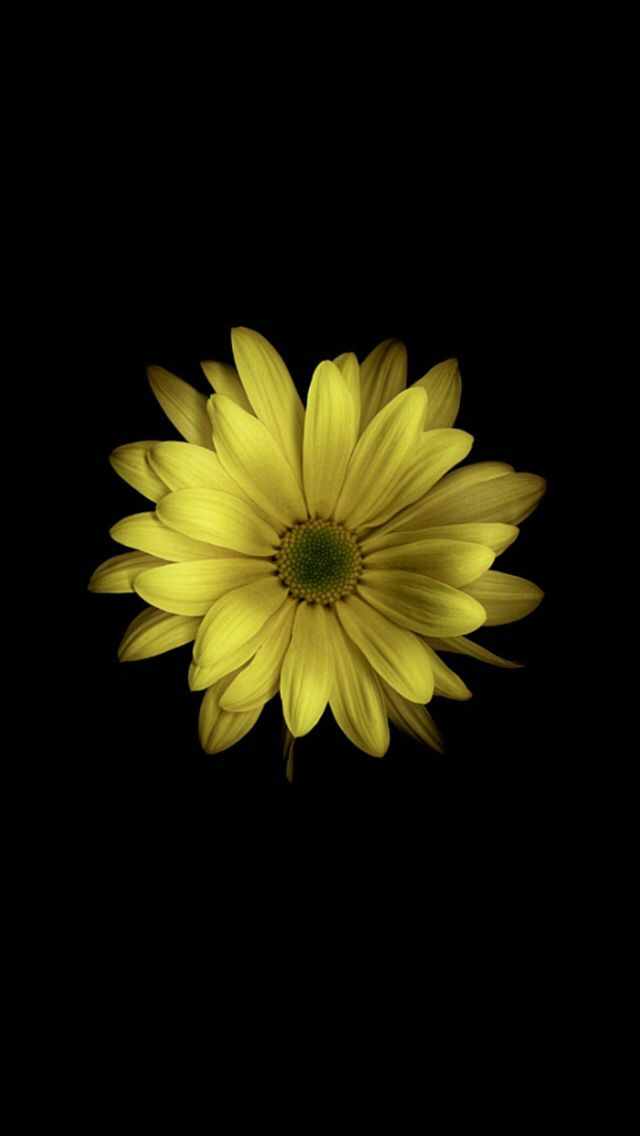 Yellow flower black background   iOS/Android - wallpaper