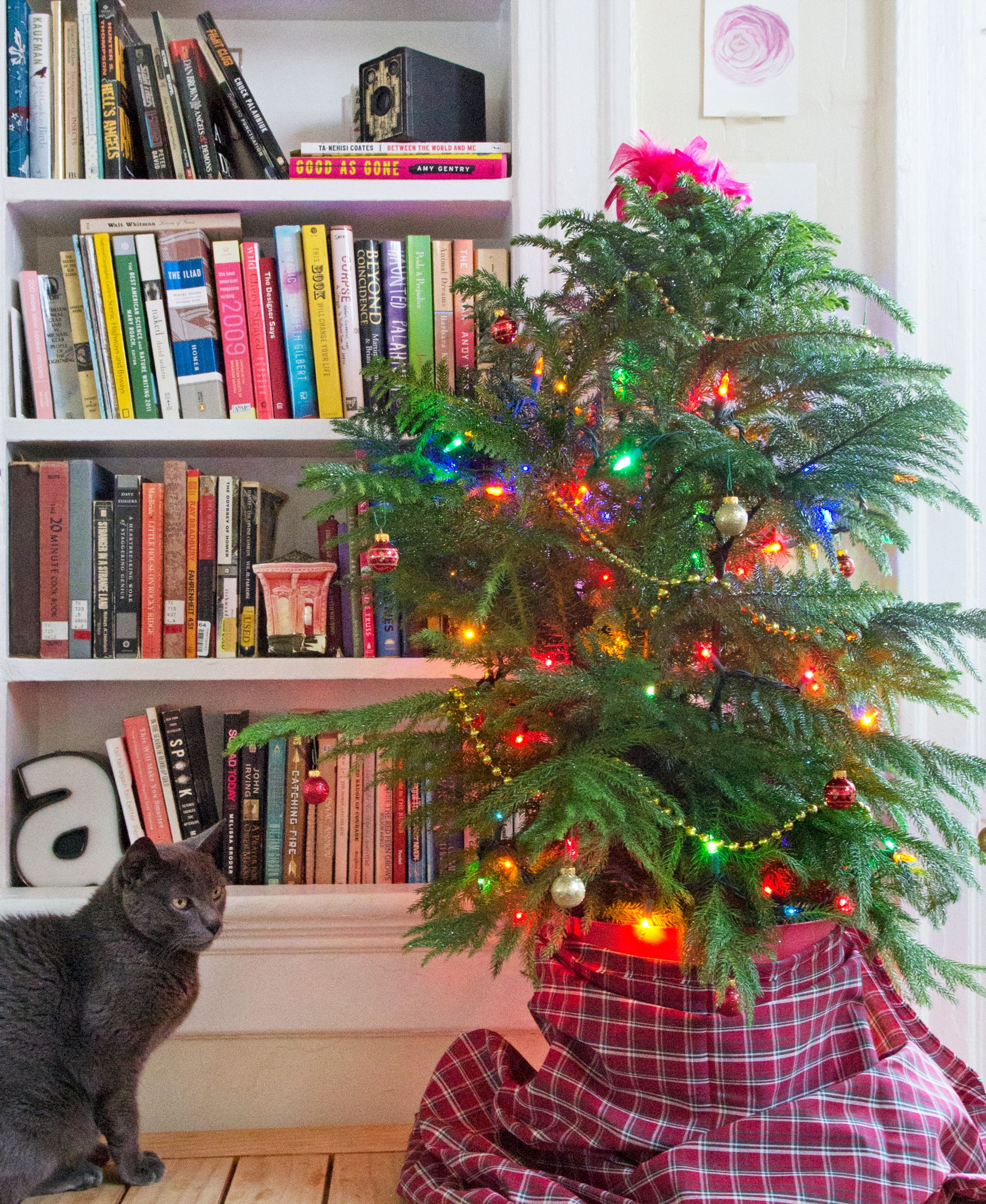 This Hardware Store Houseplant Is a Perfect Christmas Tree | HoHoHo ...