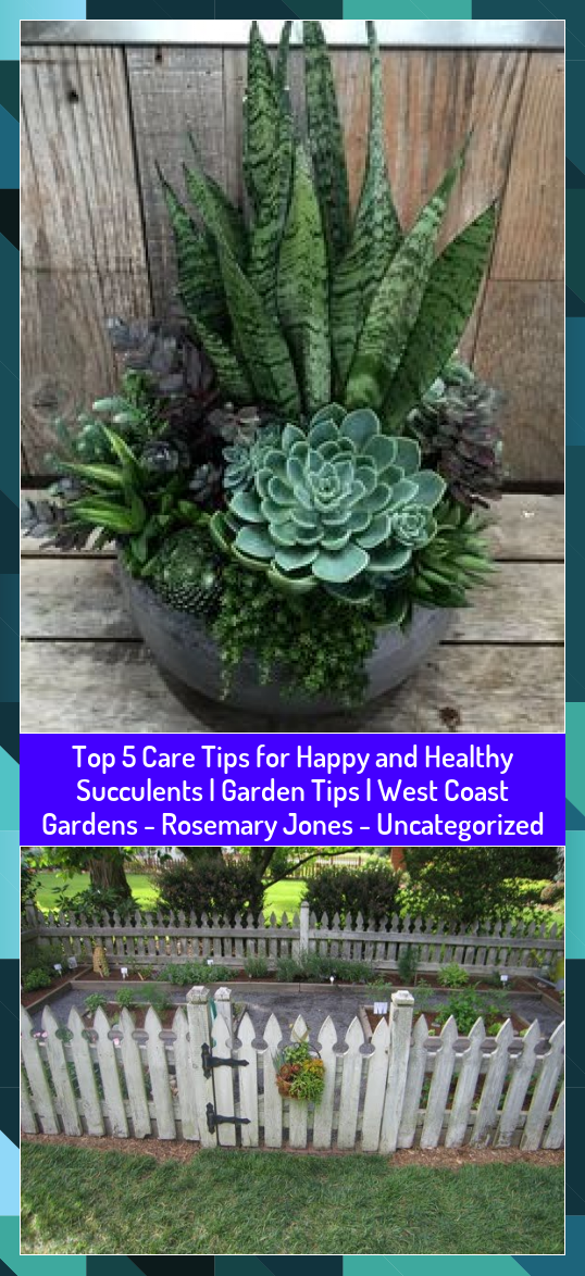 Top 5 Care Tips for Happy and Healthy Succulents  Garden Tips  West Coast Gardens  Rosemary Jones  Uncategorized