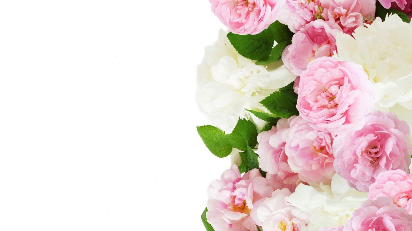 Skachat Oboi Rozovye Roses Rozy Razdel Cvety V Razreshenii