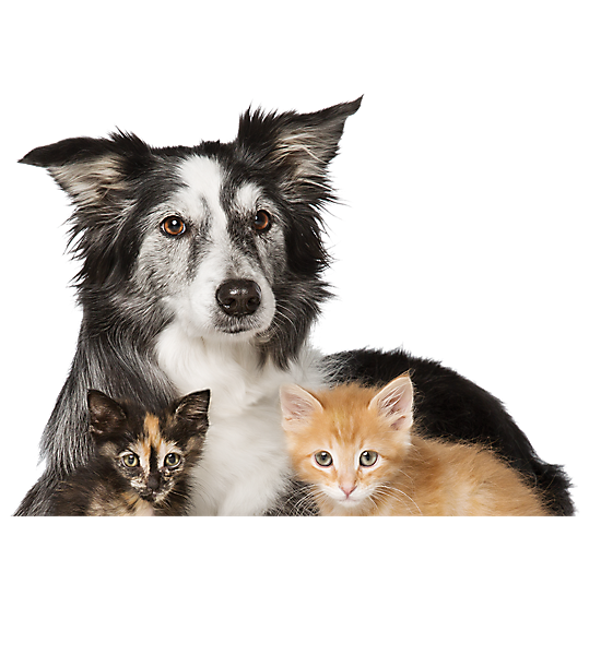 Cats and Dogs for Adoption PetSmart Saves Lives Dog cat