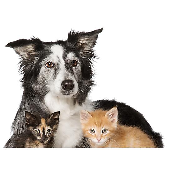 Cats And Dogs For Adoption Petsmart Saves Lives Dog Adoption Dog Cat Pet Spray