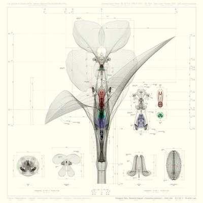Inorganic Flora | Macoto Murayama [2011]
