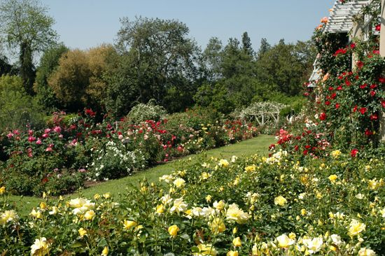 Rose Garden Huntington Botanical Gardens And Library