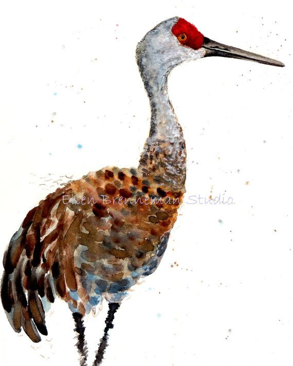 Sandhill Crane Bird Drawing