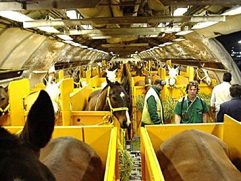 """the seatbelt signed has been turned off- feel free to move around your stall now""  Jet setting horses...   Riding Aside"