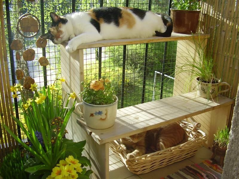 cat zen zen cats pinterest katzen balkon und balkon gestalten. Black Bedroom Furniture Sets. Home Design Ideas