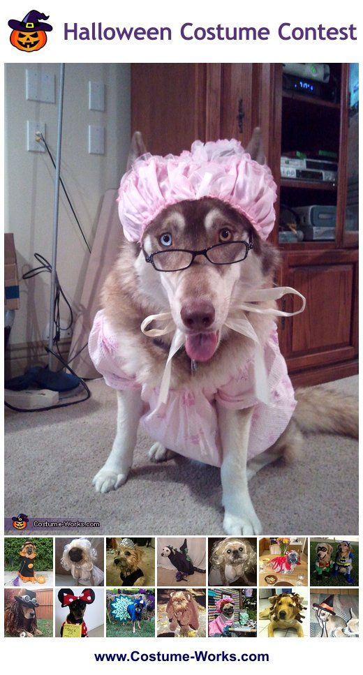 Homemade costumes for pets homemade costumes diy costumes and homemade costumes for pets this website has tons of diy costume ideas solutioingenieria Image collections