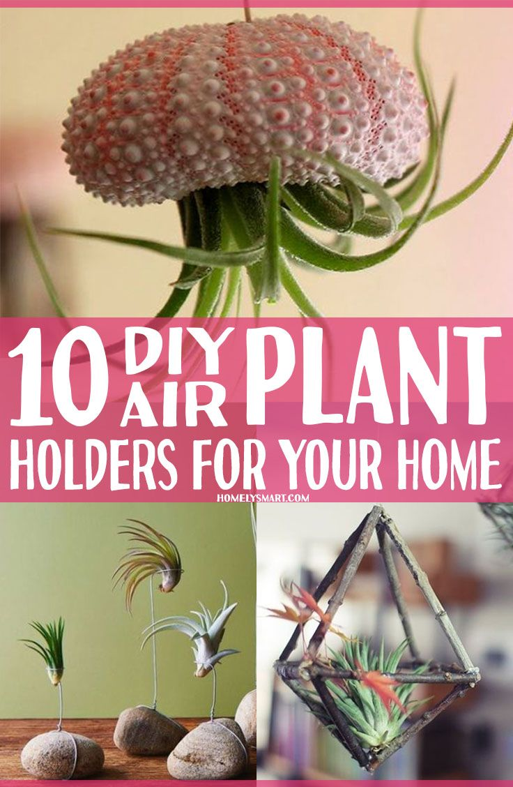 10 DIY Air Plant Holders For Your Home (With images