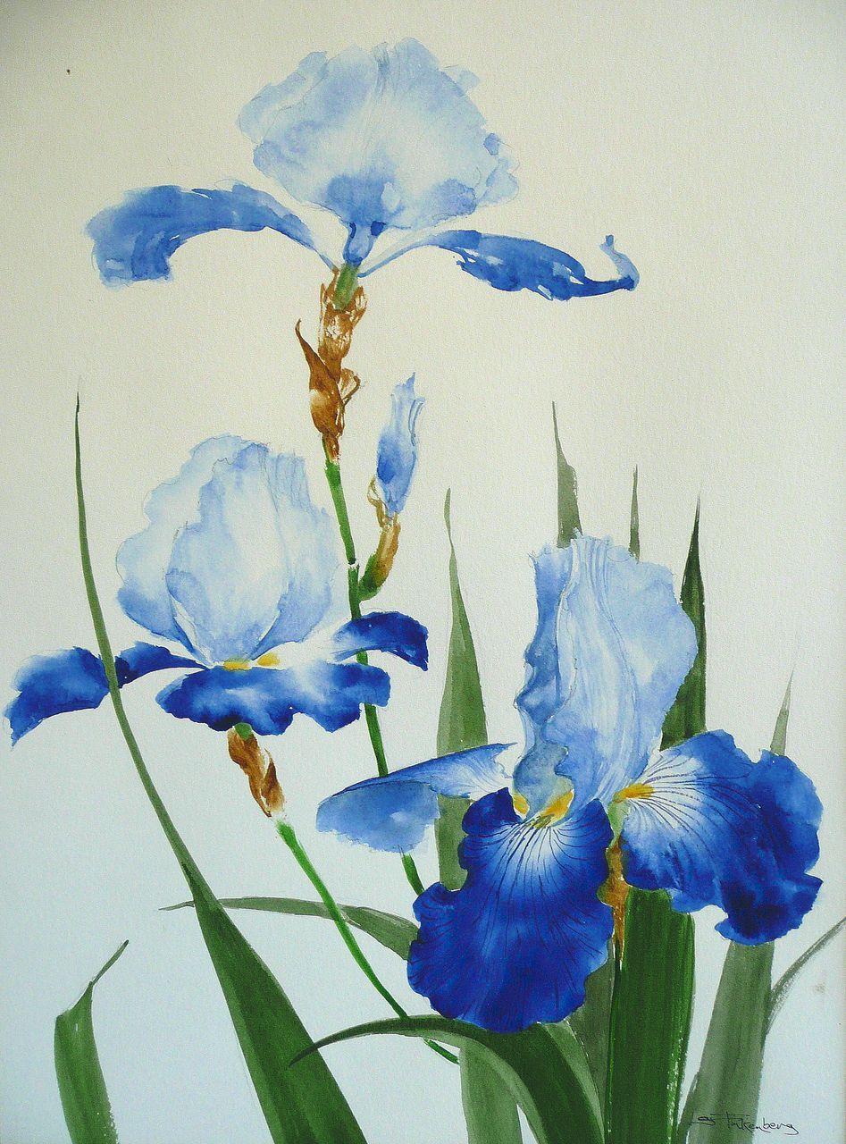Original iris floral watercolor s finkenberg pinturas decorativas flower art izmirmasajfo