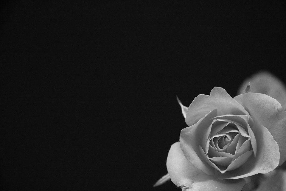 Gambar Rangkaian Bunga Hitam Putih Mawar Bunga Hitam Abu Foto Gratis Di Pixabay Mengapa Bunga Duka Cita Identik Den Black And White Black Images Free Black