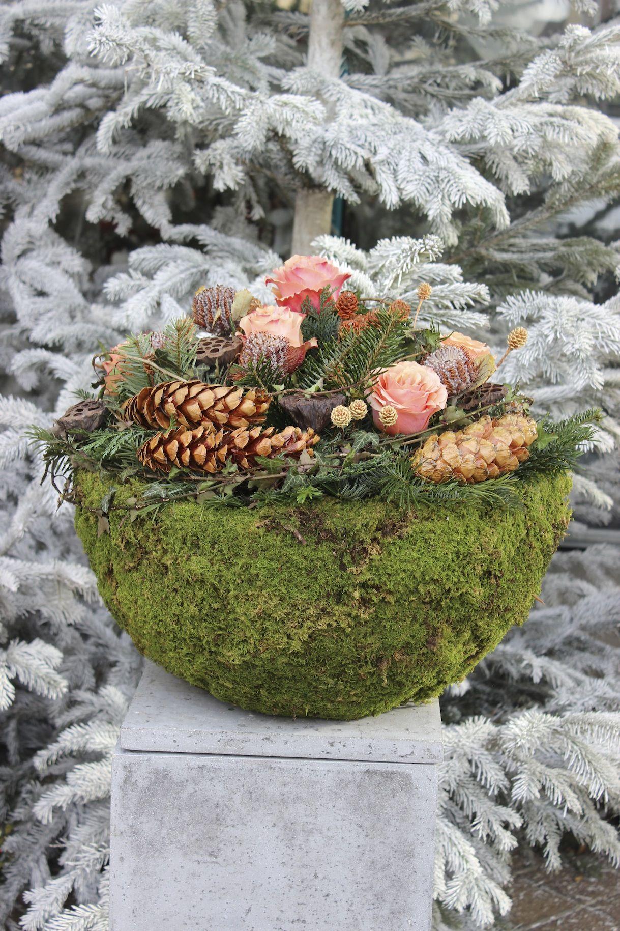 weihnachtliche blumenschale aus moos mit zapfen und rosen auf 39 s grab trauerfloristik. Black Bedroom Furniture Sets. Home Design Ideas