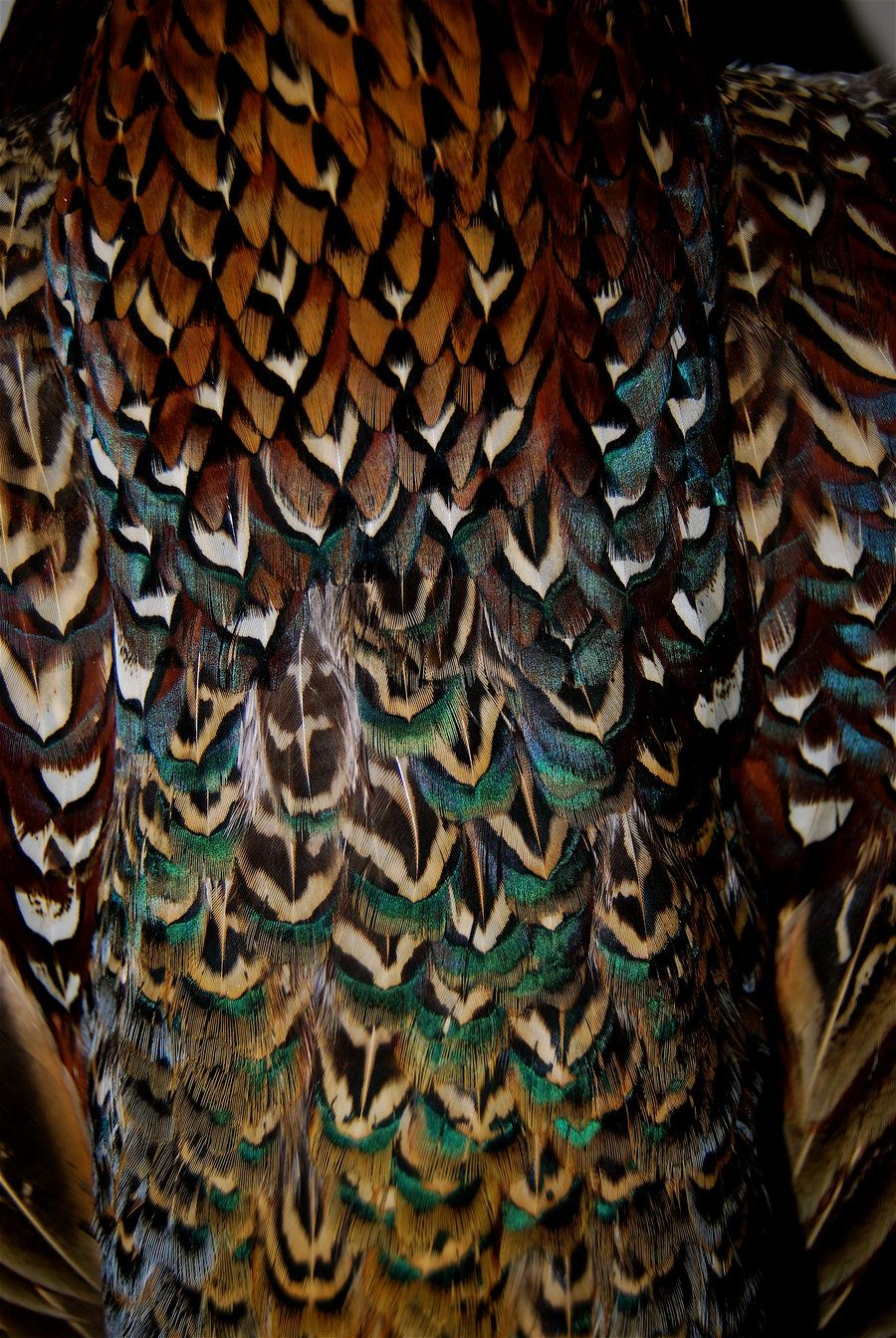 Plumage | Patterns in nature, Feather art, Texture
