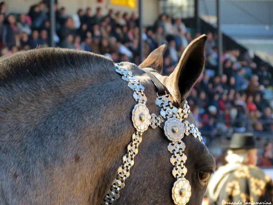Cabezada de plata gaucho criollas argentina for Cabezadas para caballos