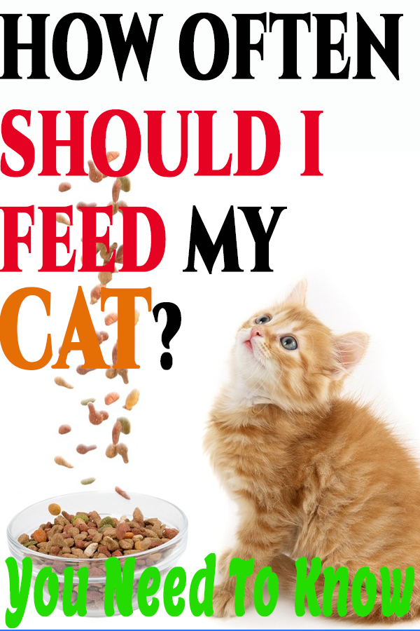 How Long Does It Take a Cat To Digest Food in 2020   Cat ...
