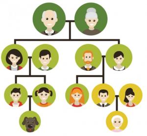 Derechos los abuelos con los nietos | Arbol genealogico para niños ...