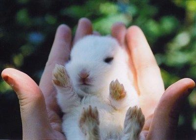 Furry baby rabbit being held in hands