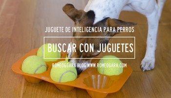 Cinco Juegos De Inteligencia Caseros Para Perros Perros Juegos Perros Recetas De Comida Para Perros